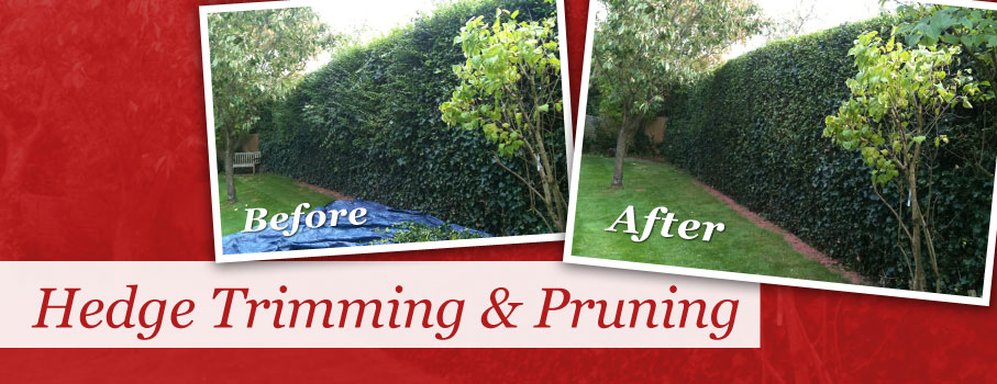 Hedge Trimming & Pruning