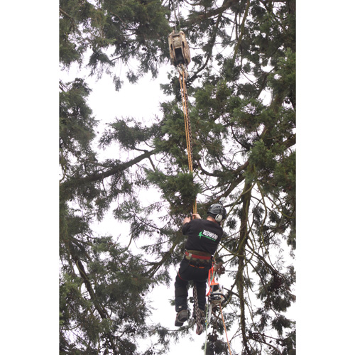 Redwood Tree Care