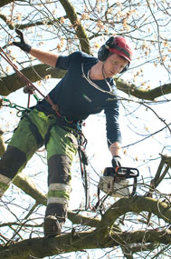 tree care services birmingham and solihull