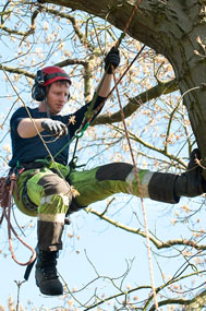 solihull tree surgeon