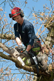 tree care solihull